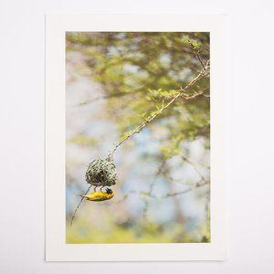 "Other - 9.5x13"" Art Print - South African Weaver Bird"
